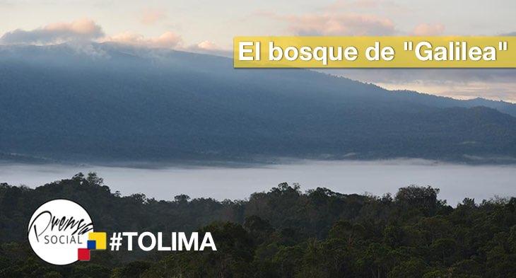 tolimabosquegalilea